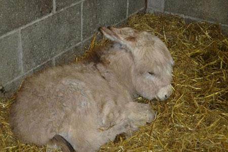 pet-farm-animals-1