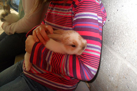 pet-farm-animals-11