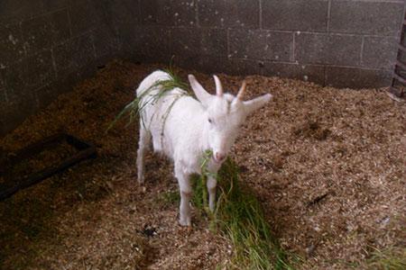 pet-farm-animals-14