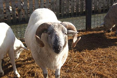 pet-farm-animals-18