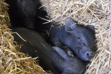 pet-farm-animals-22
