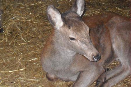pet-farm-animals-23