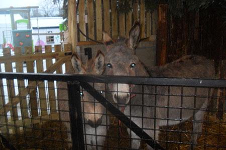 pet-farm-animals-24