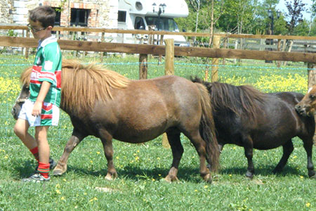 pet-farm-animals-26