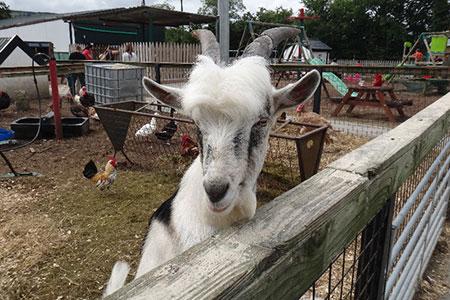 pet-farm-animals-3