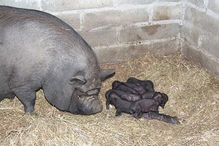 pet-farm-animals-31