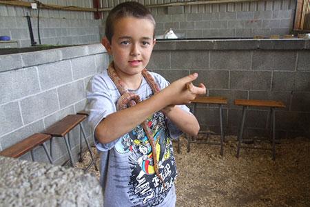 pet-farm-animals-32