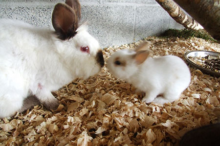 pet-farm-animals-34