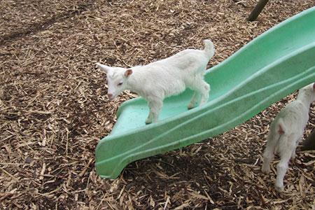 pet-farm-animals-8
